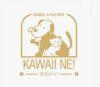 Lowongan Kerja Dokter Hewan di Kawaii Ne Kennel n Cattery